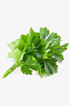 Infused Oil Coriander